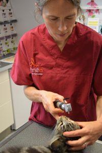 La ferrière Capucine Lemagne chat examen ophtalmo avec lampe normale